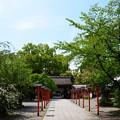 初夏の装いの平野神社