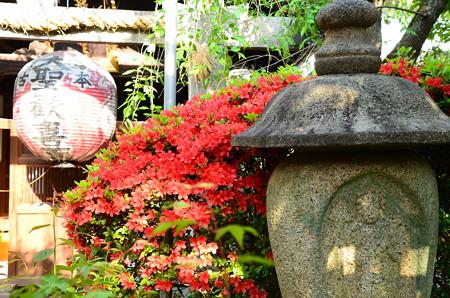 躑躅咲く雨宝院