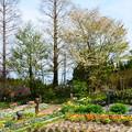 ガーデンミュージアム比叡の桜風景