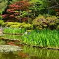 写真: 春もみじと杜若の蒼龍池