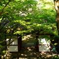 写真: 新緑の仁王門を見下ろして~