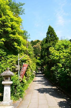 緑の大豊神社参道