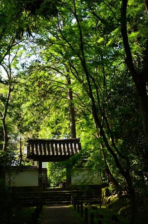 新緑の中の地蔵院