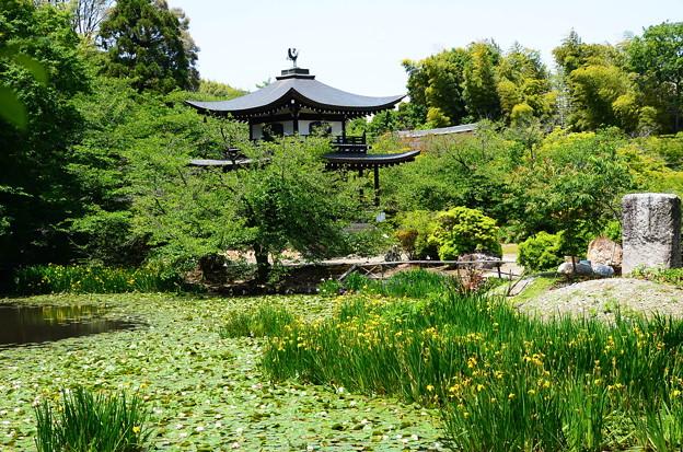黄菖蒲咲く氷室池と観音堂