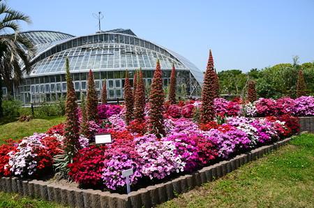 初夏の植物園