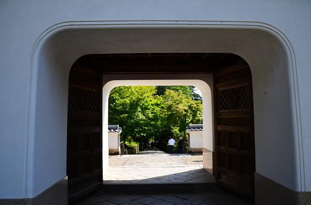 青もみじの興聖寺