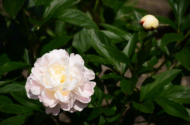 波の花(ナミノハナ)