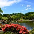 Photos: 皐月の心字池