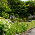 写真: 空木咲く深山の泉