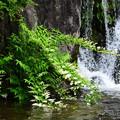 写真: 滝脇の空木(ウツギ)