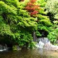 写真: 木漏れ日の滝