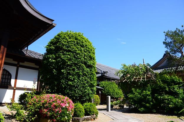 皐月咲く法住寺