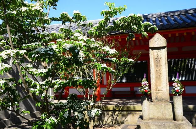 山法師(ヤマボウシ)