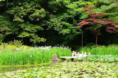 春もみじと花菖蒲の平安神宮