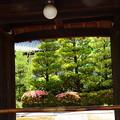 写真: 皐月咲く聖澤院