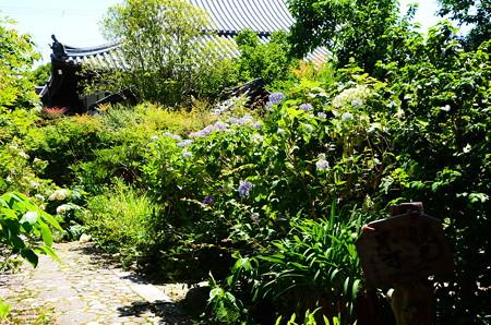 文華殿の紫陽花