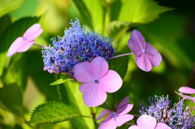 ブルーと赤紫と~