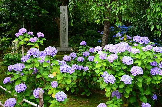 名勝 法金剛院庭園