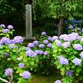 写真: 名勝 法金剛院庭園