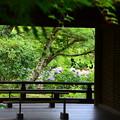 舞台越しの紫陽花