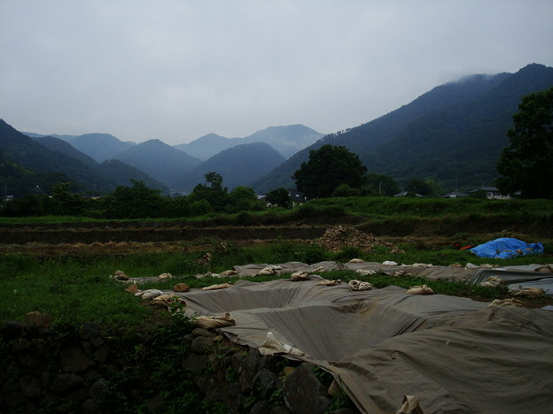 武田神社裏手からの眺め