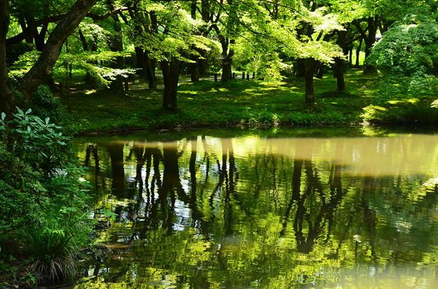緑深まる池