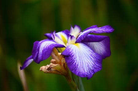 紫雲閣(シウンカク)