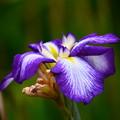 写真: 紫雲閣(シウンカク)