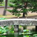 蓮池のお散歩