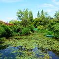 夏のモネの池