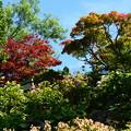 写真: 夏の紅葉