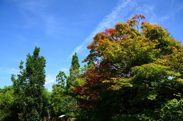 もう、秋空~?