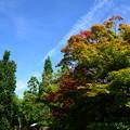 写真: もう、秋空~?