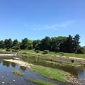 写真: 夏空の賀茂川