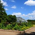 夏の府立植物園