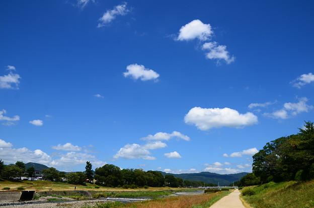 Photos: 夏空の賀茂川