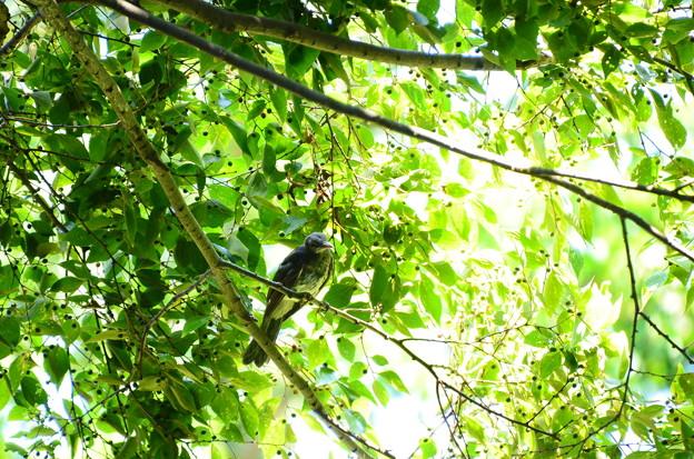トンボ池の鳥さん