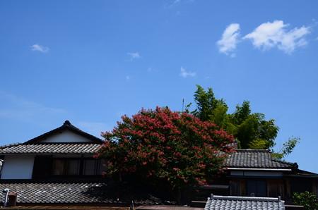 夏空に咲く百日紅(サルスベリ)