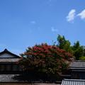 写真: 夏空に咲く百日紅(サルスベリ)