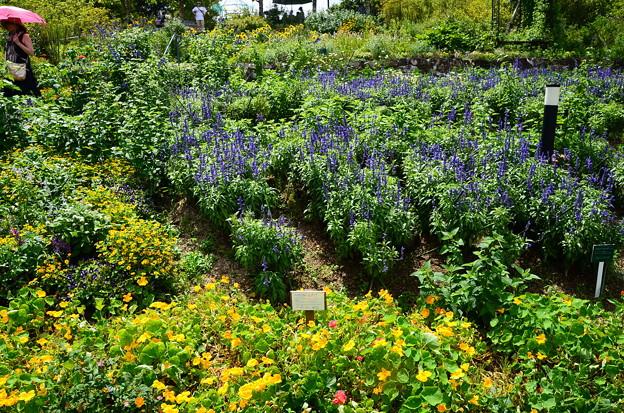 真夏の花壇
