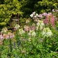 写真: 風蝶草の中の陶板画
