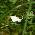 写真: 白と白~