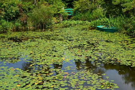 晩夏のモネの池