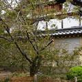写真: 長徳寺のオカメ