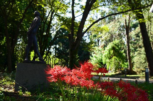 彼岸花咲く植物園