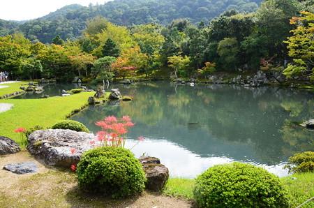 彼岸花咲く曹源池
