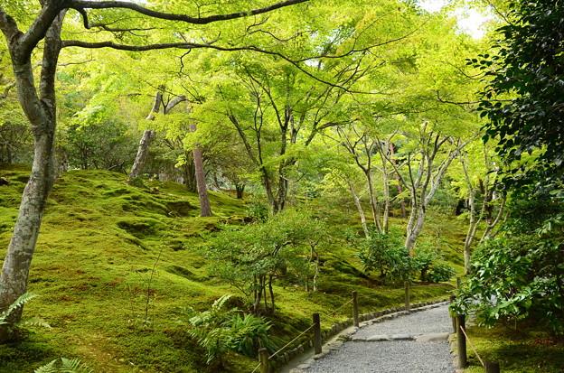 緑の天龍寺