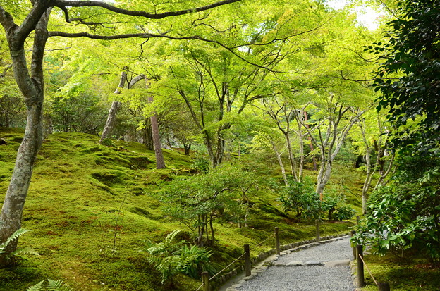 Photos: 緑の天龍寺