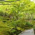 写真: 緑の天龍寺