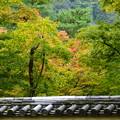 写真: 宝厳院の色付き